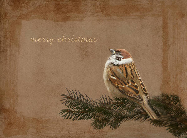 Fauna Mixed Media - Merry Christmas by Heike Hultsch