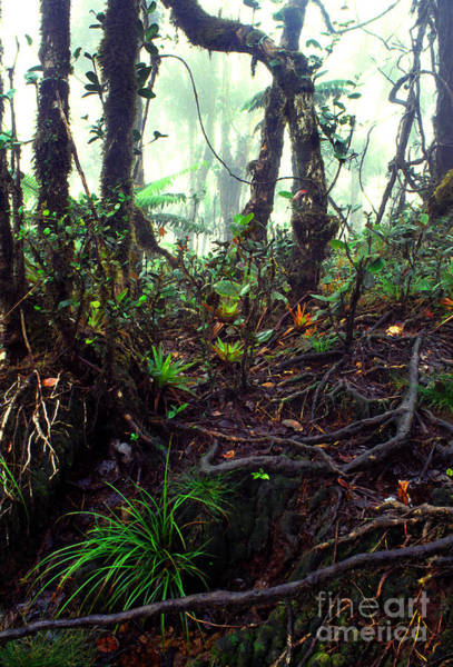 Photograph - Misty Rainforest El Yunque by Thomas R Fletcher