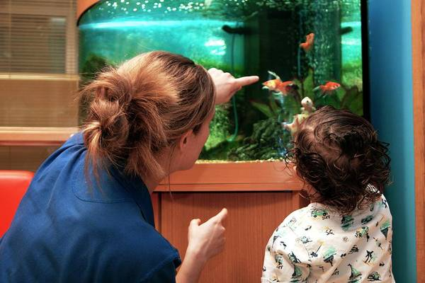 Fish Tank Photograph - Paediatric Cardiology Ward by Life In View