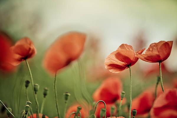 Wall Art - Photograph - Poppy Meadow by Nailia Schwarz