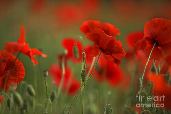 Quantum Wall Art - Photograph - Red by Nailia Schwarz