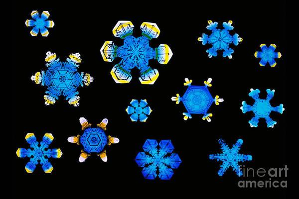 Photograph - Snowflakes by Scott Camazine