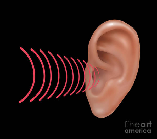 Photograph - Sound Entering Human Outer Ear by Gwen Shockey
