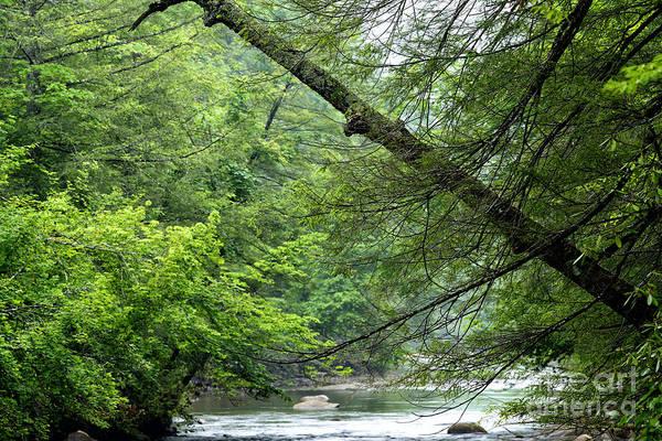 Photograph - Spring Along Cranberry River by Thomas R Fletcher