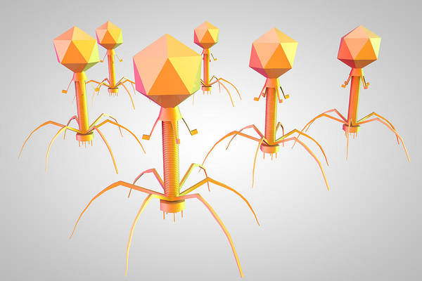 Wall Art - Photograph - T4 Bacteriophage Virus, Illustration by Ella Marus Studio
