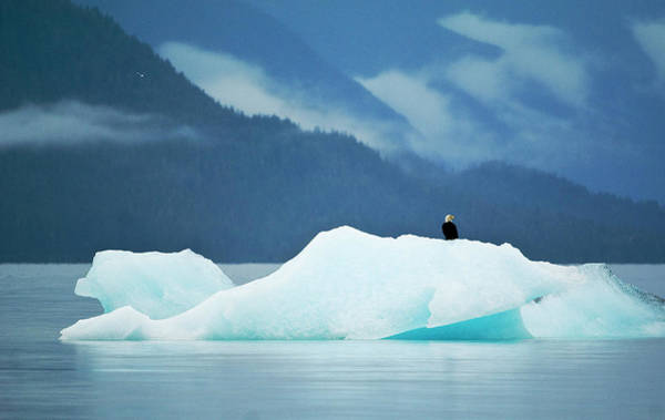 Bald Mountain Photograph - Usa, Alaska, Inside Passage by Jaynes Gallery