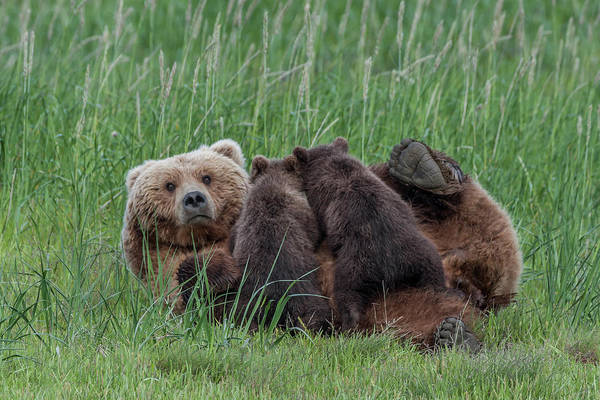 Wall Art - Photograph - Usa, Alaska, Katmai National Park by Frank Zurey