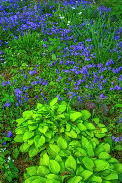 Blue Jay Photograph - Usa, Pennsylvania by Jaynes Gallery