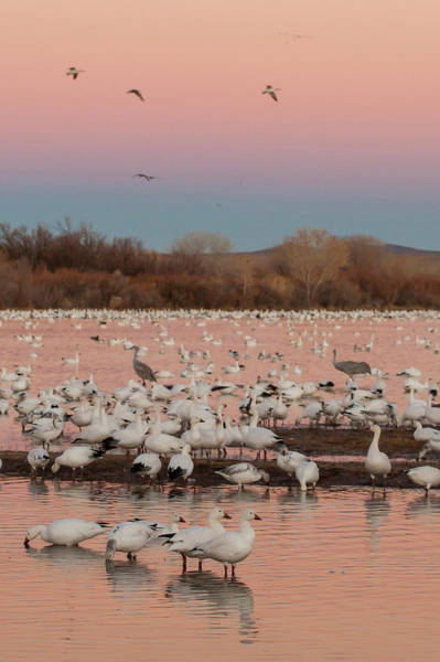 National Wildlife Refuge Wall Art - Photograph - Usa, New Mexico, Bosque Del Apache by Jaynes Gallery