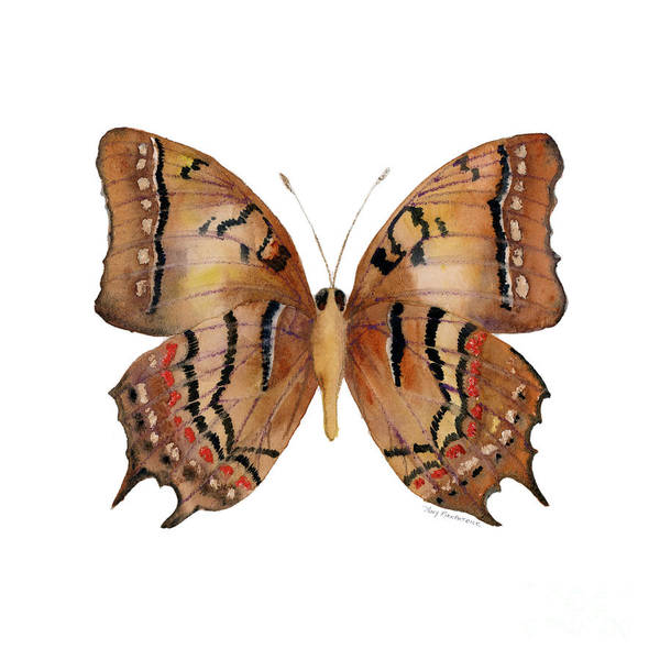 Wall Art - Painting - 62 Galaxia Butterfly by Amy Kirkpatrick