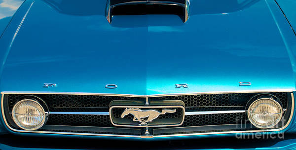 Photograph - 65 Ford Mustang Fastback Hood by Mark Dodd