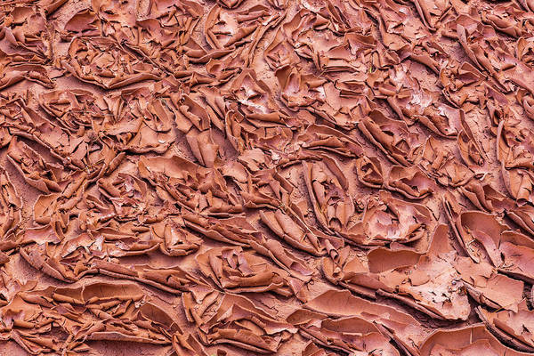 Warming Up Wall Art - Photograph - Usa, Utah, Glen Canyon National by Jaynes Gallery