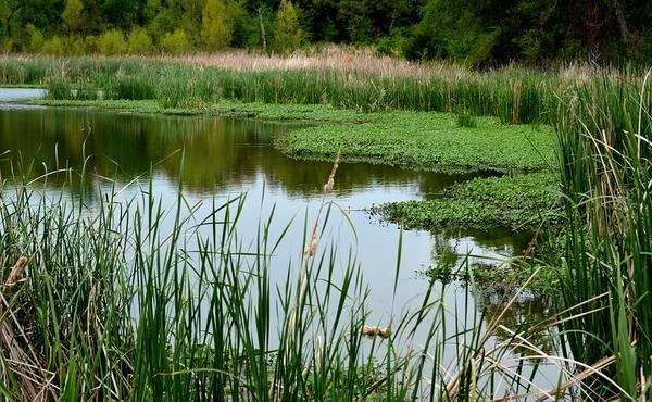 Photograph - 6929 Thackerville Pond by Ricardo J Ruiz de Porras