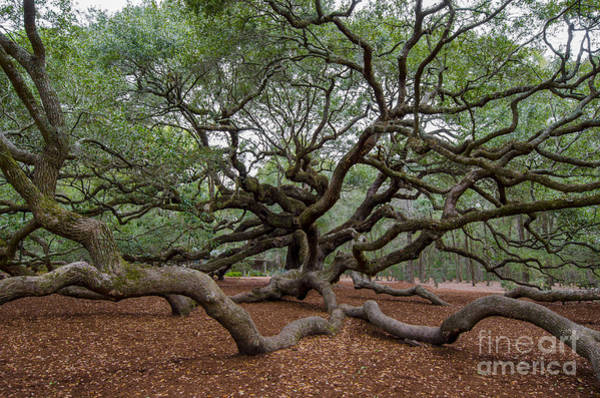 Photograph - Mighty Branches by Dale Powell