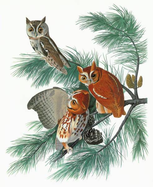 Pine Needles Painting - Audubon Owl by Granger