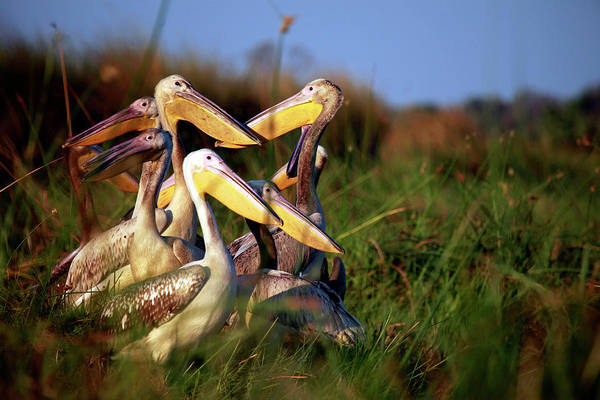Wing Back Photograph - Botswana, Okavango Delta by Kymri Wilt
