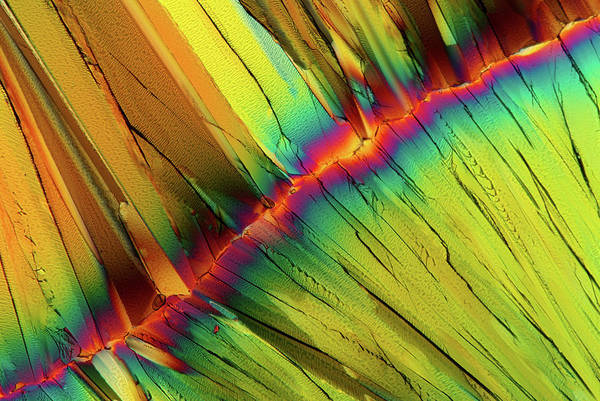 Wall Art - Photograph - Citric Acid Crystals by Marek Mis