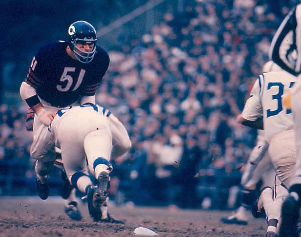 Defensive Photograph - Dick Butkus by Retro Images Archive