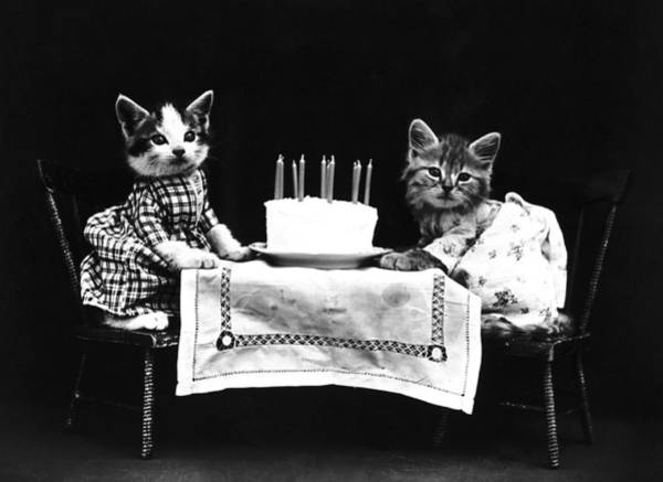 Wall Art - Photograph - Frees Kittens, C1914 by Granger