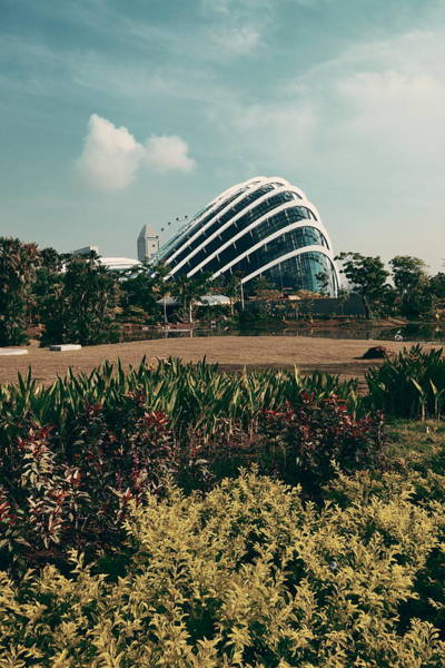 Photograph - Garden By The Bay by Songquan Deng
