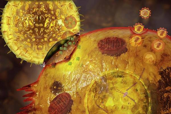 Immune System Wall Art - Photograph - Immune Synapse by Carol & Mike Werner