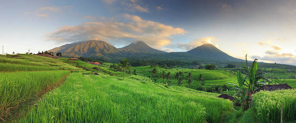 Indonesian Culture Photograph - Indonesia, Bali, Rice Fields And by Michele Falzone