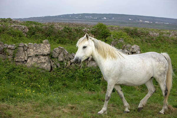 Eire Photograph - Inishmore Island by Tom Norring