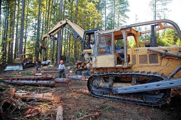 Fort Bragg Photograph - Logging Redwood Trees by Jim West