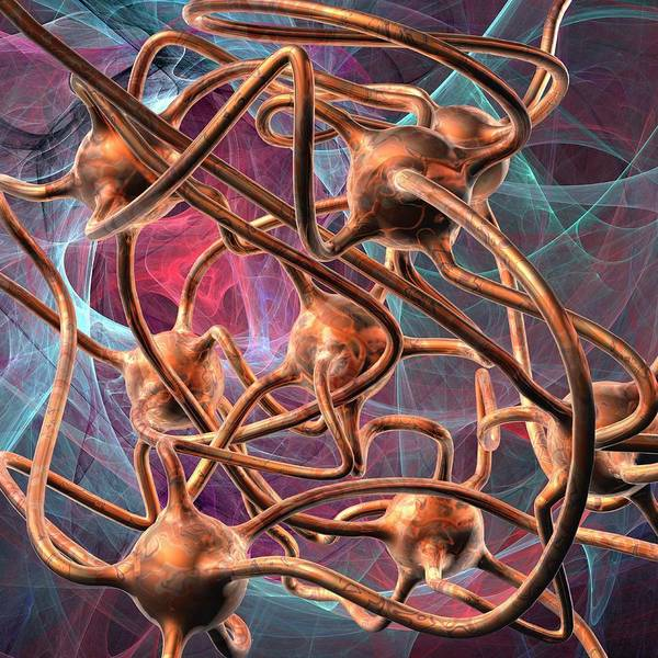 Axon Wall Art - Photograph - Neural Network by Laguna Design/science Photo Library