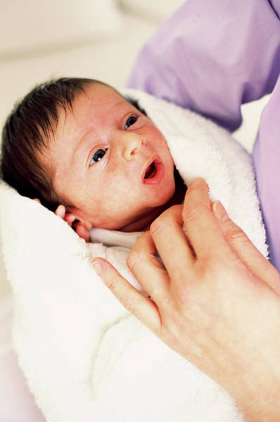 Newborn Photograph - Newborn Baby by Ian Hooton/science Photo Library
