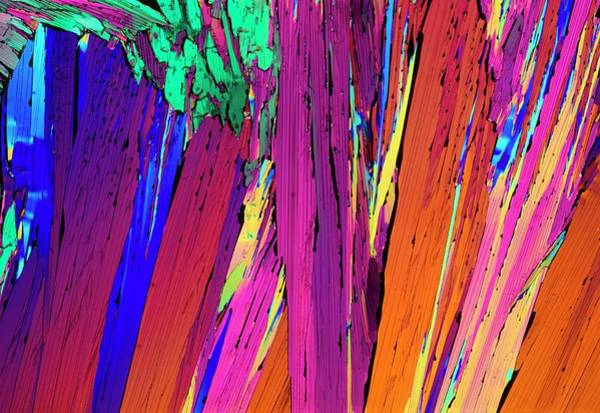 Wall Art - Photograph - Plm Of Crystals Of Estrone by Sidney Moulds/science Photo Library