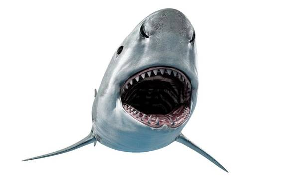 Wall Art - Photograph - Shark Against White Background by Sciepro/science Photo Library