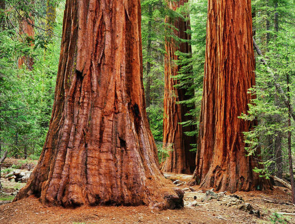 Wall Art - Photograph - Usa, California, Yosemite National Park by Jaynes Gallery