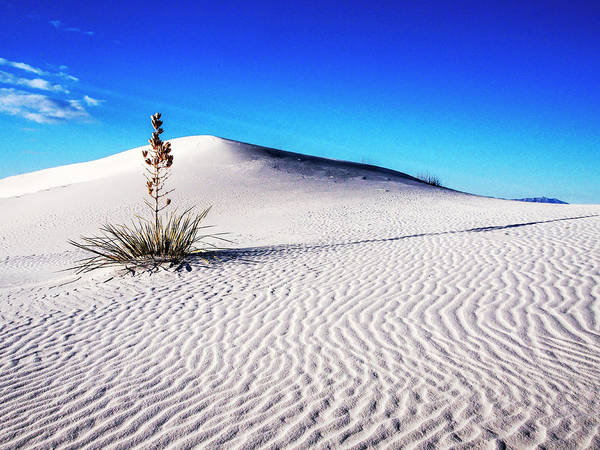Usa, New Mexico, White Sands National Art Print by Terry Eggers