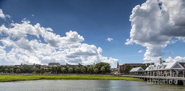 Low Battery Photograph - Waterfront Park In Charleston by David Oppenheimer