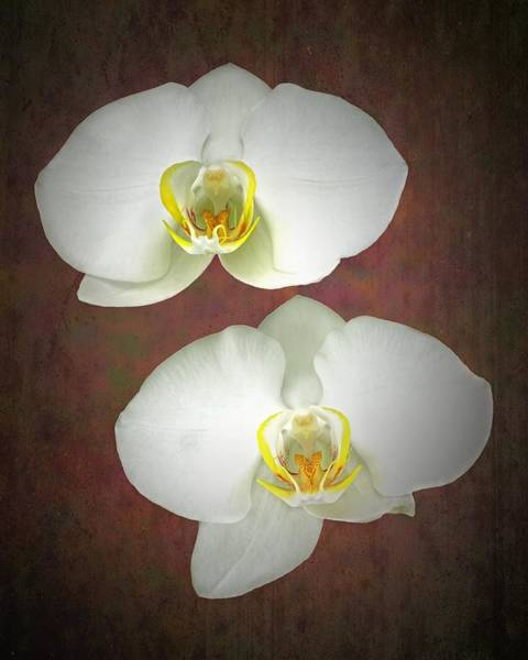 Photograph - White Orchid-5 by Rudy Umans