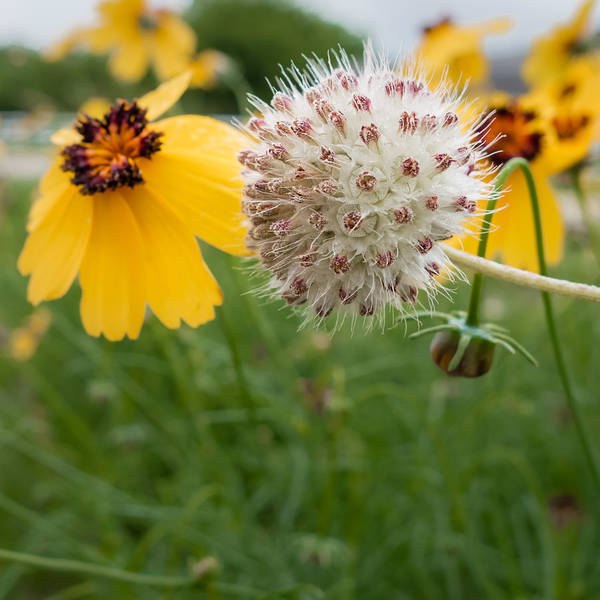 Photograph - Wildflowers by Melinda Ledsome