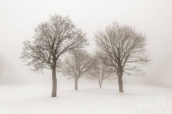 Leafless Tree Wall Art - Photograph - Winter Trees In Fog by Elena Elisseeva