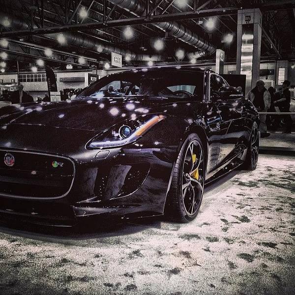 Jaguar Photograph - Instagram Photo by Matt Yates