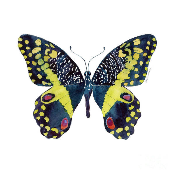 Butterfly Wall Art - Painting - 73 Citrus Butterfly by Amy Kirkpatrick