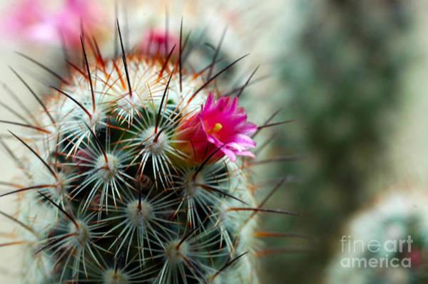 734a Tubular Cactus Flower Art Print