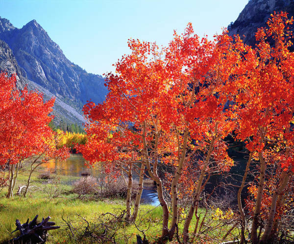 Abundant Wall Art - Photograph - Usa, California, Sierra Nevada Mountains by Jaynes Gallery