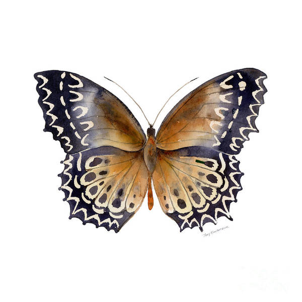 Butterfly Wall Art - Painting - 77 Cethosia Butterfly by Amy Kirkpatrick