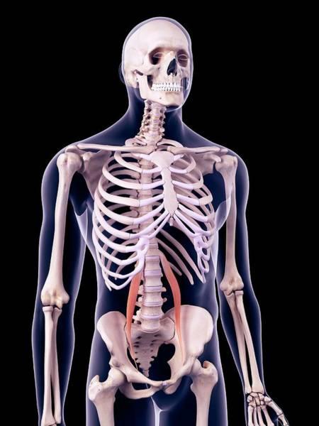 Wall Art - Photograph - Abdominal Muscles by Sebastian Kaulitzki/science Photo Library