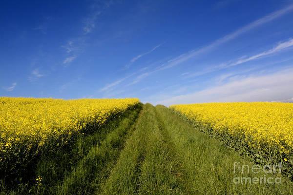 Wall Art - Photograph - Agricultural Landscape. Auvergne. France. by Bernard Jaubert