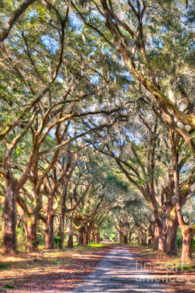 Photograph - Plantation Allee Of Oaks by Dale Powell