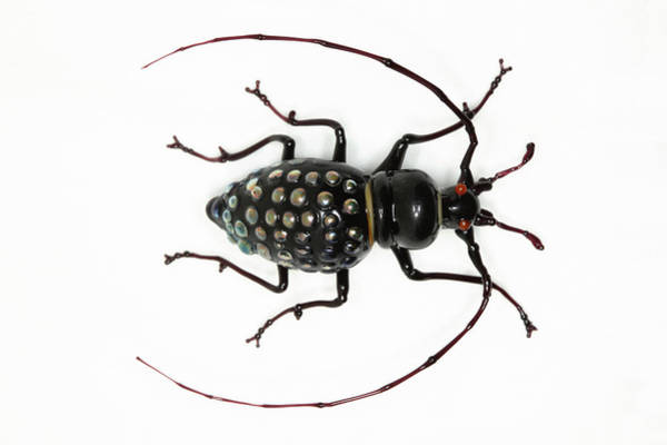 Wall Art - Photograph - Beetle by Tomasz Litwin
