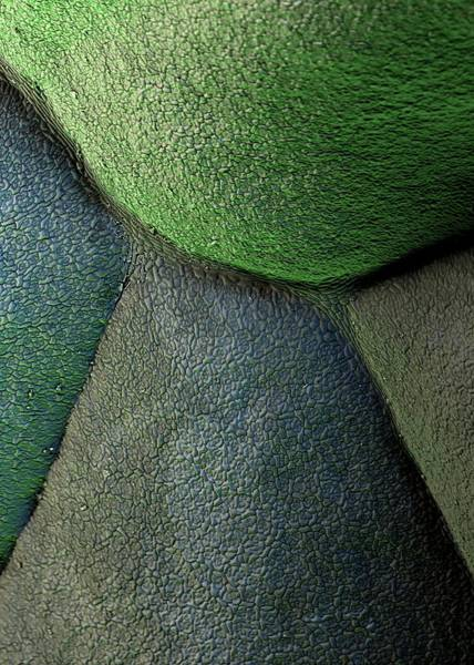 Broccoli Art Print by Stefan Diller