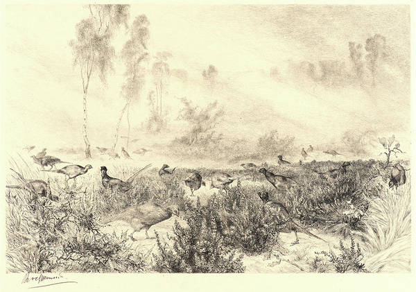 Mist Drawing - Félix Bracquemond French by Litz Collection