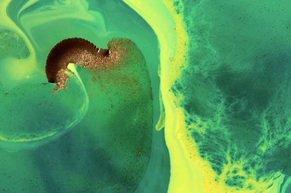 Oil Paint Photograph - Ink Patterns In Water by Pery Burge/science Photo Library
